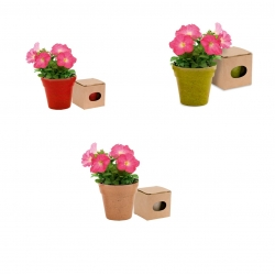 Flowerpots Biodégradable