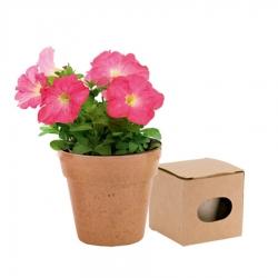 Pots Biodégradables